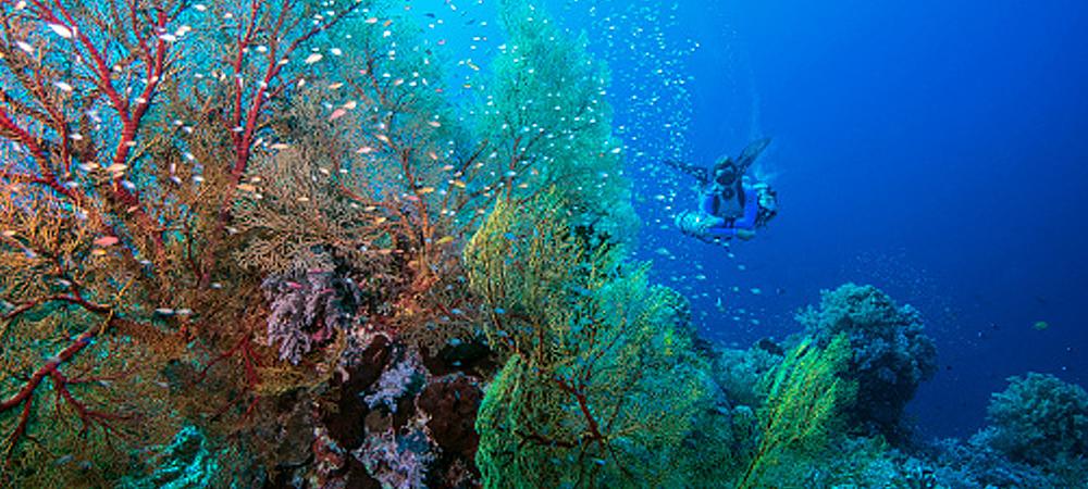 Tubbataha Coral Reef